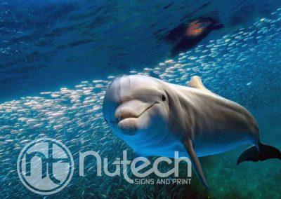 Dolphin-Underwater-web-1024x682