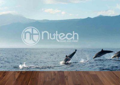 Dolphins-swim-near-jettyr-web-1024x546